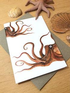 Octopus front.jpg