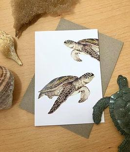 Turtles front.jpg