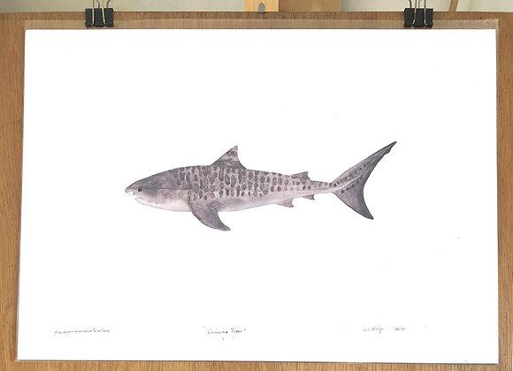 Tiger Shark print