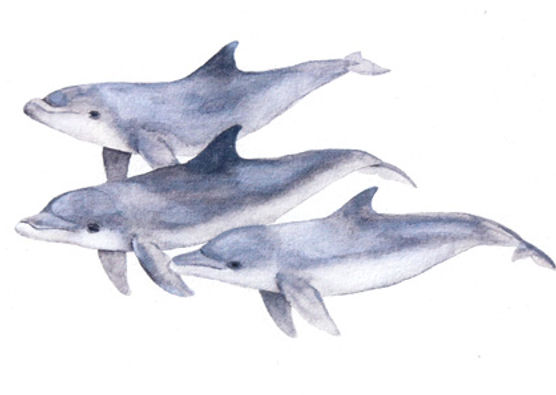 Dolphin trio - detail.jpeg