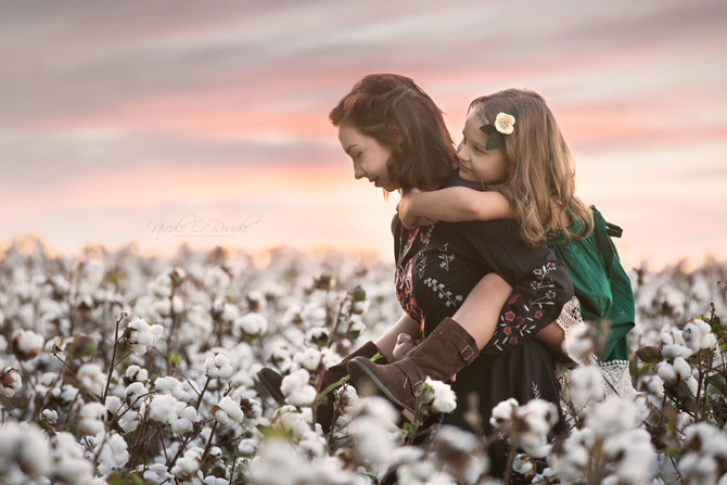 Cotton Field Glory