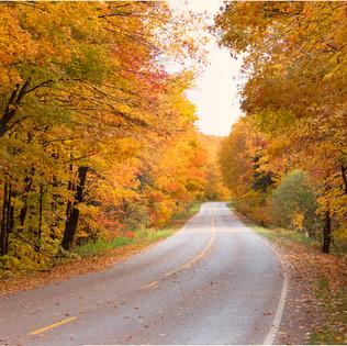 Fall Scene 4.jpg