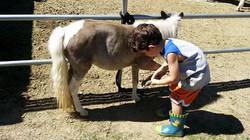 corben pony playtime