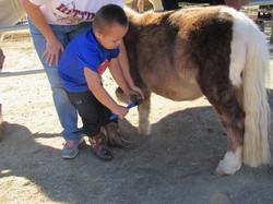 mason pony playtime