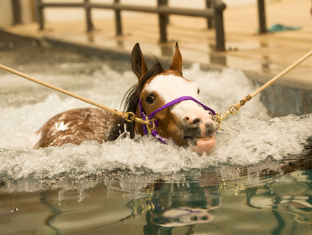 Want to make your horse a water horse?