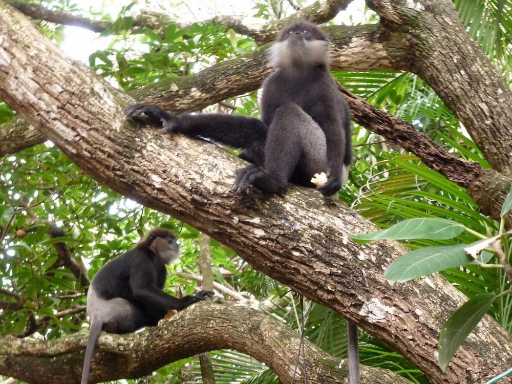 Monkeys - med quality.jpg