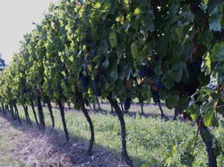 Wines from Duras