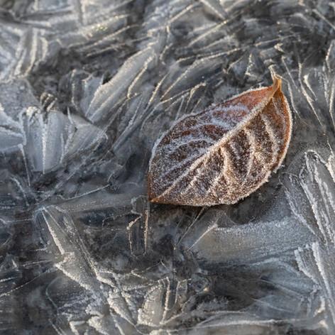 The leaf.jpg