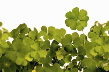 4-Leaf-Clover_edited.jpg