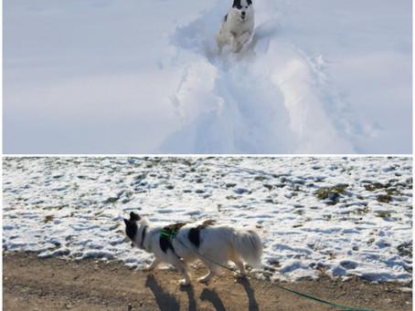 Hunde-(halter-)begegnungen