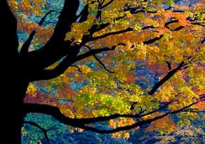 The Awe of Fall