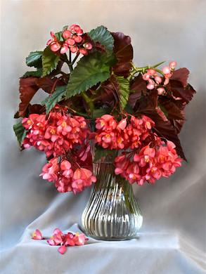 Begonias in Vase