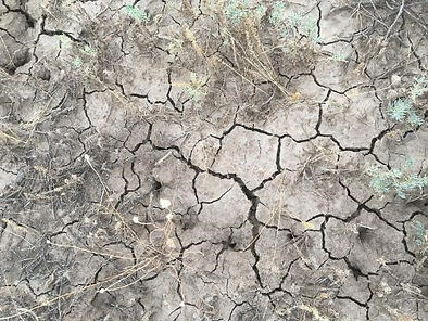 Cracked earth on the Warrego River walk, Cunnamulla