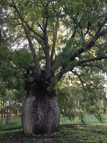 Bottle Tree, Roma