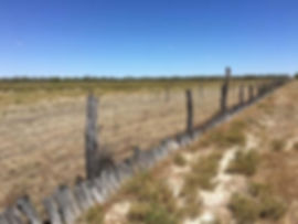 Rabbit-proof fence, Murra Murra Station