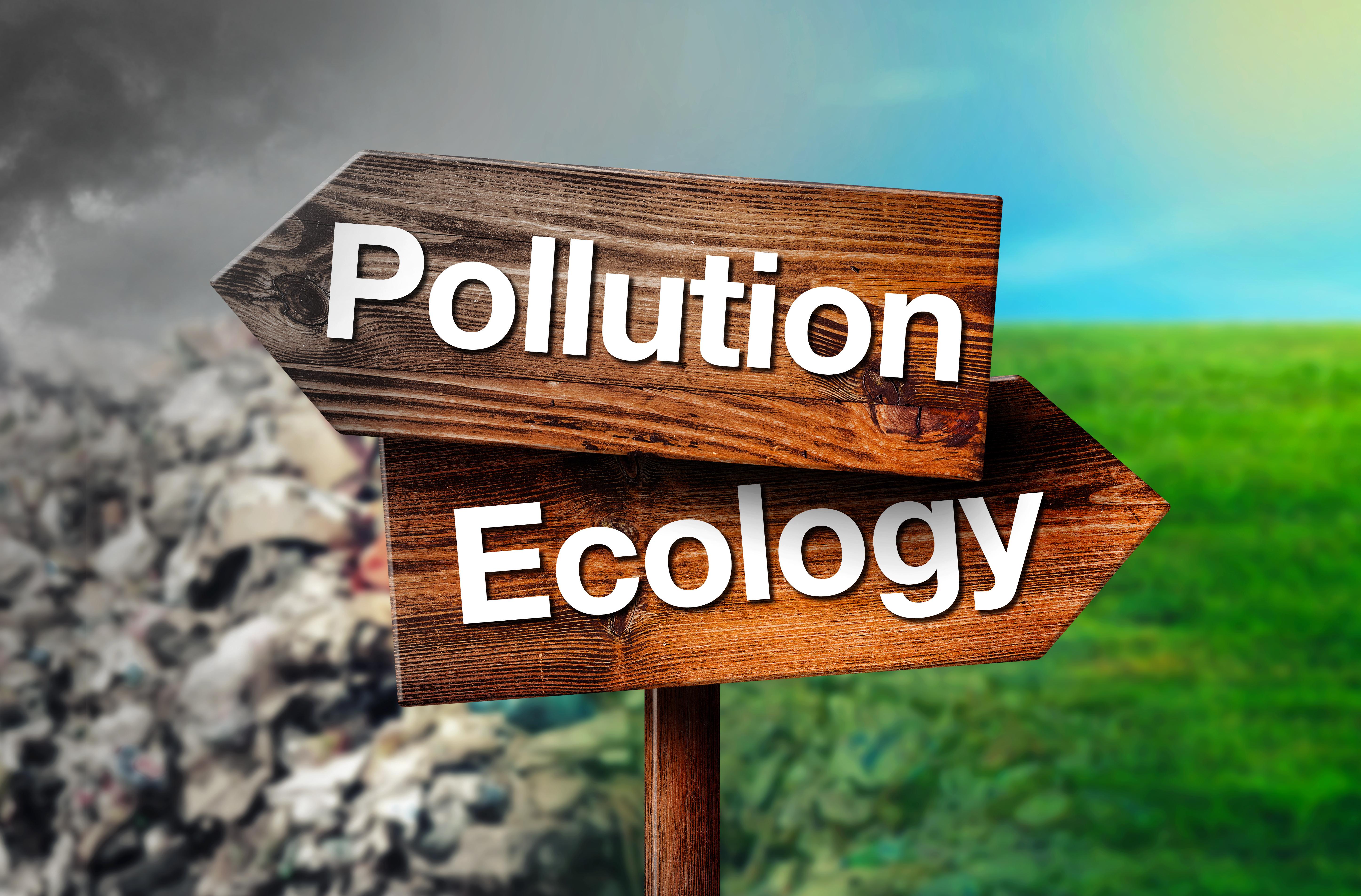 We Chose Ecology