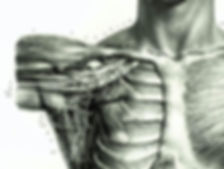 Image du plexus brachial