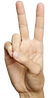 hand 2.png