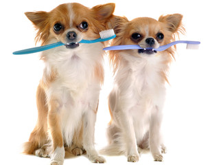 Fighting & Preventing Dog Bad Breath