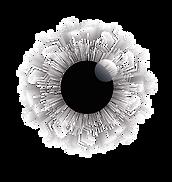 Logo TGE-01.png