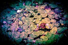 YukiSun_The Pond of Antiquity.jpg