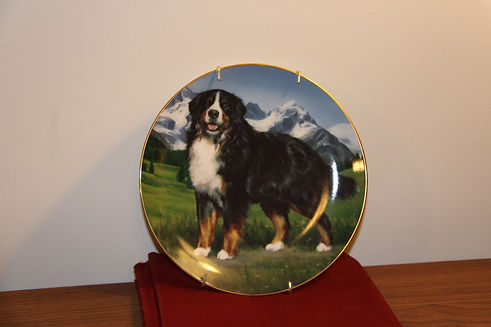 B11 73 2-IMG_0386 plate.jpg