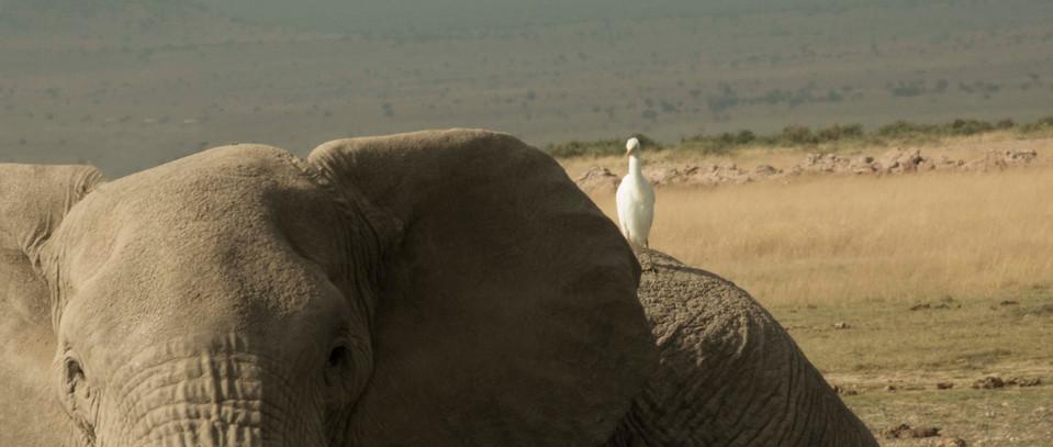 04大象和鸟.jpg