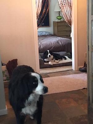 Main house dogs.jpg