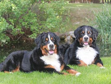Berners: Neyla & Henley