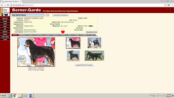 Berner-Garde Dog - Photos tab