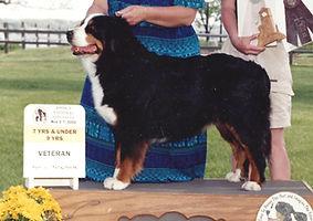 AKC Champion Bernese Mountain Dog Hailey