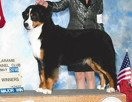 BMD Litter dam GCH Tanzanite's Once In A Sapphire Moon