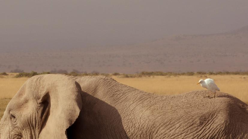 04.5大象和鸟.jpg
