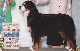 AKC CH Bernese Mountain Dog Kiva