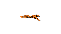 Jaguar Logo_02.png