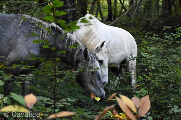 shooting chevaux cavalice