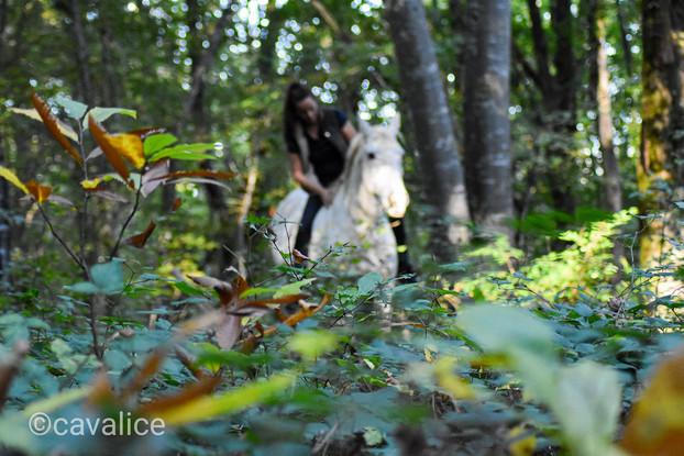 forêt Tcheval cavalice