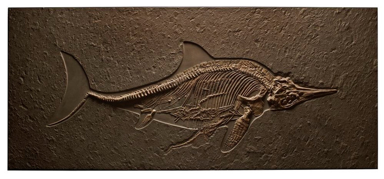 Ichthyosaur with Four Babies in Utero