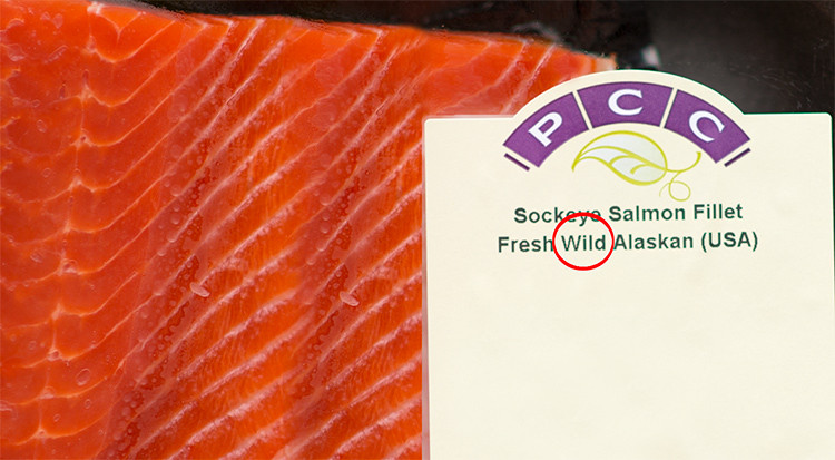 picture of fresh wild salmon