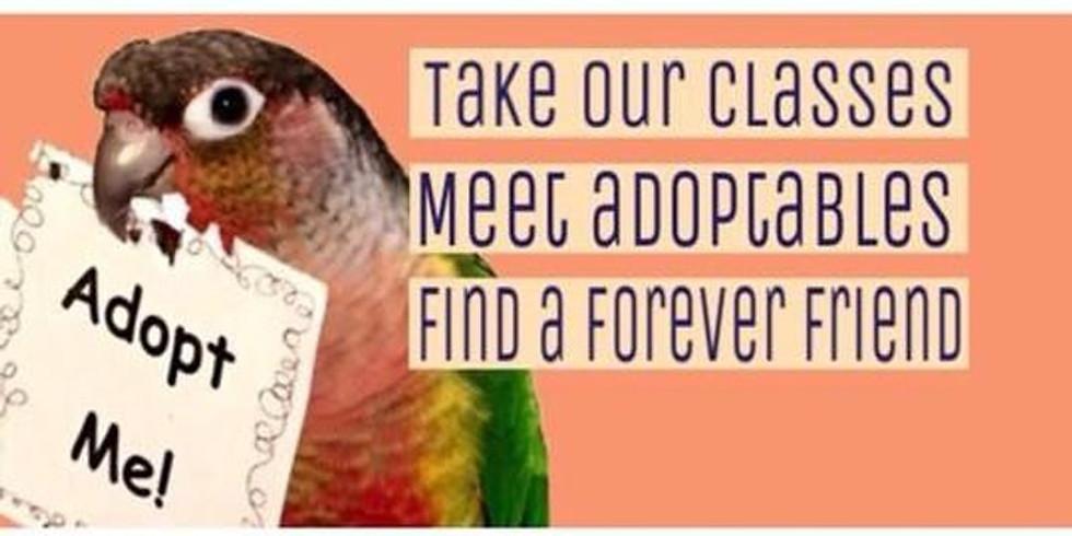 October Adoption Meet and Greet