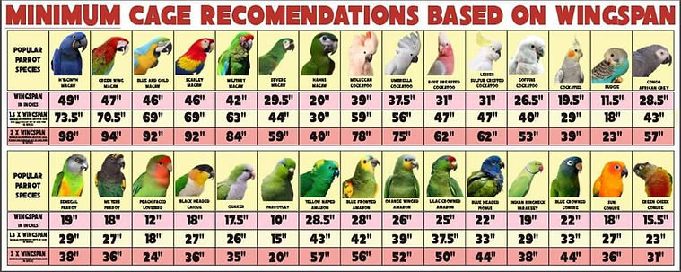 Bird Cage Size Cheat Sheet