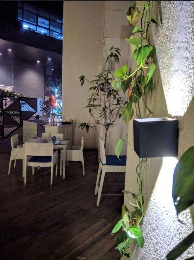 light & plant detail