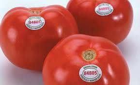 Exemplo de Tomate GMO, codificado pelo PLU