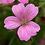 Thumbnail: Geranium Wargrave Pink