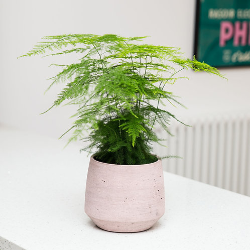 Planter no 136 (Dirty Rose Asymmetric)