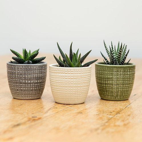 Trio of ceramic planters with succulents