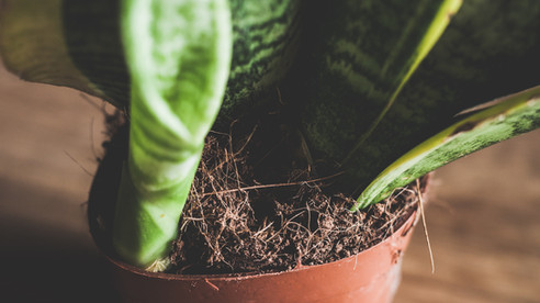 How to Repot your Houseplants 🌱