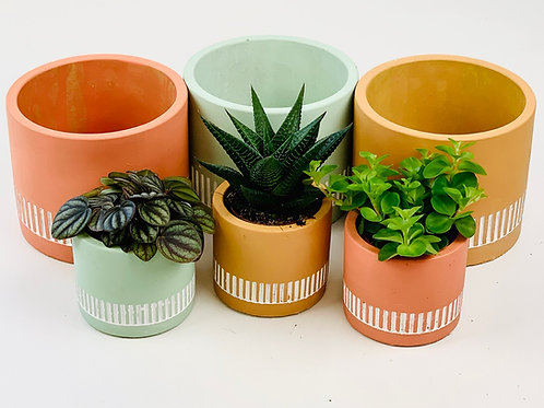 Miami Patterned Planter