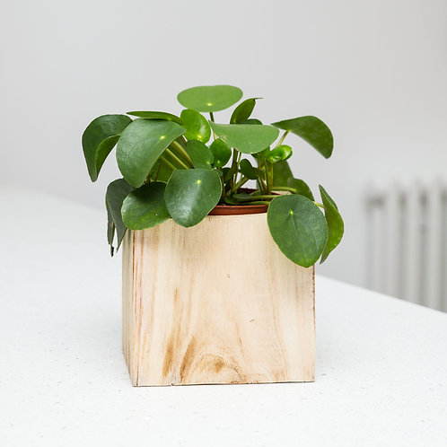 Planter no 124 (Carved wooden block)