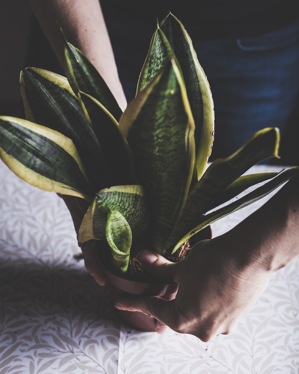 Tips for looking after houseplants